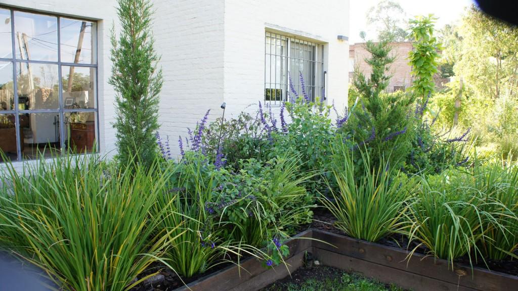 Entre las plantas se colocaron pequeños picos de luz. En el cantero, las flores de la salvia 'Indigo blue', herbácea de prolongada floración, aportan el color azul; los Dietes, plantas perennes de hojas acintadas, dan los tonos claros.