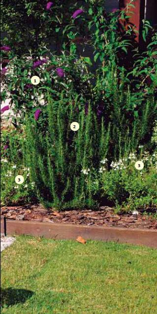 Detalle de un cantero, más elevado que el césped. Se delimitó con tablas de madera y se usó corteza de pino triturada como acolchado. Se plantó: 1) budleia (Buddleja davidii), 2) romero (Rosmarinus officinalis), 3) salvia blanca (Salvia greggii 'Alba').