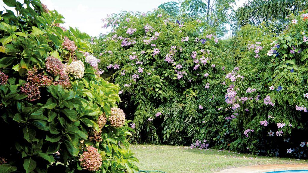 Poda de rboles y arbustos entrejardines - Poda de hortensias epoca ...
